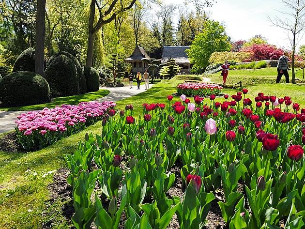 Blühende Tulpen und Besucher in den Schlossgärten Arcen